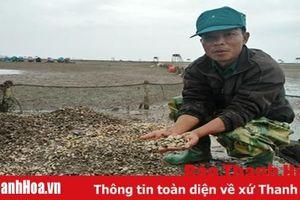 Xã Hải Lộc: Ngao chết hàng loạt không rõ nguyên nhân