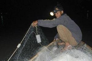Mùa săn cá bông lau ở miền Tây Nam bộ