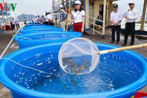 Hàng triệu con cá giống được thả để tái tạo nguồn lợi thủy sản