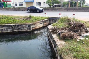 Phát hiện lợn chết thả trôi trên kênh thủy lợi ở Quảng Trị
