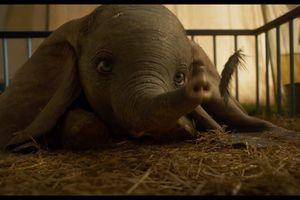 Chú voi biết bay Dumbo và thế khó đối với đại gia Disney