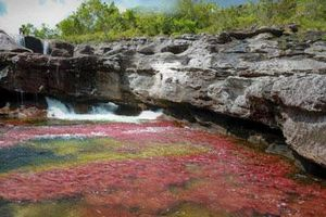 Khám phá thảm thực vật kỳ lạ tại dòng sông đẹp nhất thế giới