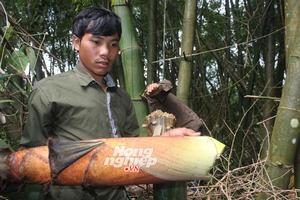 Chuyện lạ về khu rừng với những cây tre khổng lồ ở Quảng Nam