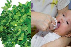 Những bài thuốc quý từ cây rau ngót