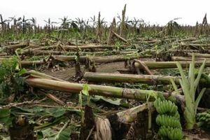 Phú Thọ: Thiên tai làm thiệt hại hàng chục tỷ đồng