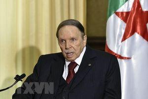 Hội đồng Hiến pháp Algeria chấp thuận đơn từ chức của Tổng thống Bouteflika