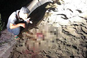Bé trai 7 tuổi bị đàn chó dữ cắn đến nguy kịch