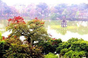 Vẻ đẹp Hồ Gươm những ngày hoa gạo nở