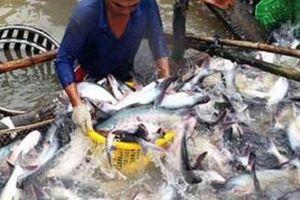 Doanh nghiệp thủy sản xoay xở biến da cá, mỡ cá thành tiền