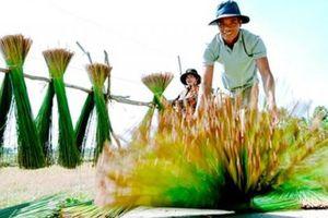 Kiên Giang: Nhổ cỏ dại đan thành giỏ, nón, bán sang Tây