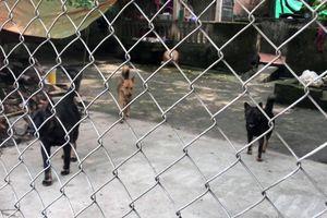 Đàn chó cắn bé trai 7 tuổi tử vong từng nhiều lần cắn trẻ em
