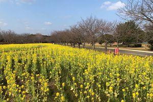 5 điểm du lịch thú vị mà ít người Việt biết khi đến Fukuoka Nhật Bản