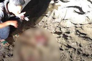 Hưng Yên: Bé trai 7 tuổi tử vong vì bị nhiều con chó tấn công