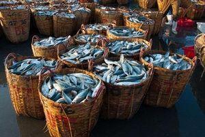 Khuyến nghị DN thực hiện xác nhận và chứng nhận nguồn gốc hải sản khai thác
