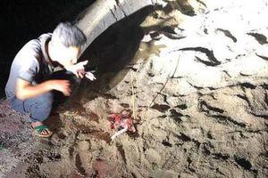 Hưng Yên: Bé trai 7 tuổi bị đàn chó cắn dã man phải nhập viện cấp cứu