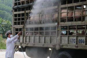 Đà Nẵng: Tăng cường kiểm soát tránh dịch tả lợn châu Phi