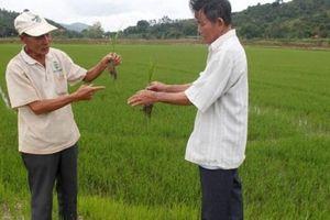 Đắk Lắk: Xây dựng nông thôn mới gắn với tái cơ cấu nông nghiệp