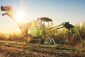 Lợi nhuận công ty mía đường TTC Sugar tăng mạnh