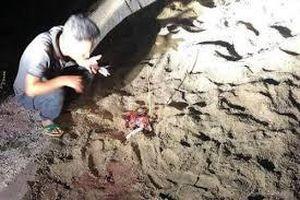 Hưng Yên: Điều tra vụ cháu bé bị đàn chó cắn chết