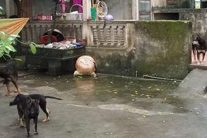 Bé 7 tuổi bị đàn chó cắn tử vong: Cần xử nghiêm