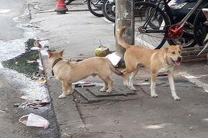 Hiểm họa chó dữ tấn công