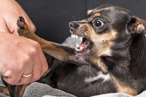 TP.HCM: 1.300 người bị chó, mèo cắn gây thương tích nặng chỉ trong 2 tháng