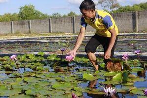 Nam thanh niên làm giàu từ mô hình trồng hoa súng Thái Lan