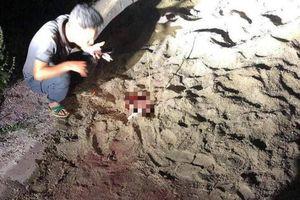 Nóng trên mạng xã hội: Nhói lòng vụ bé trai bị đàn chó tấn công đến chết