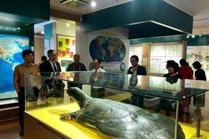 Trưng bày 'anh em sinh đôi' của mẫu vật rùa Hoàn Kiếm