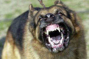 Bị chó dữ tấn công nhưng bé trai thoát chết vì áp dụng chiêu này trong lúc hoảng loạn