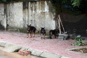 Chủ của đàn chó thả rông cắn chết người có phải chịu trách nhiệm hình sự không?