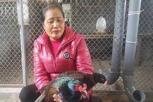 Nam Định: Nuôi loài chim quý hiếm bán giống, bỏ túi cả chục triệu đồng/tháng
