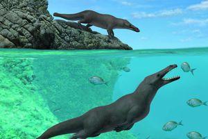 Phát hiện cá voi 4 chân cổ đại từng 'đi bộ' trên đất liền