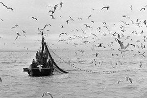 Bi kịch những chiếc 'tàu ma' Triều Tiên dạt vào bờ biển Nhật Bản