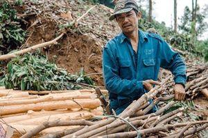 Phát triển bền vững lâm sản ngoài gỗ