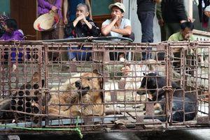 Đàn chó cắn chết bé trai 7 tuổi ở Hưng Yên được chuyển về trụ sở công an