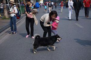 Xử lý hình sự chủ để chó cắn chết người