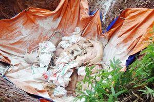 Chỉ đạo chôn lợn chết ở sân bóng, chủ tịch xã ở Quảng Ninh bị cảnh cáo