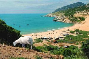 Khám phá vẻ đẹp hoang sơ hút khách du lịch của Bãi Tràng