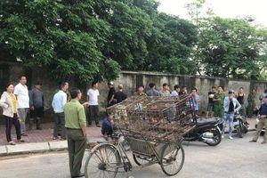 Có thể tiêu hủy đàn chó cắn chết bé trai 7 tuổi ở Hưng Yên nếu bị bệnh dại