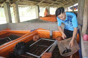 Đồng Nai: Chàng trai 9X làm giàu nhờ nuôi lươn sạch