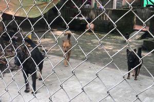 Chuyển đàn chó dữ gần 10 con cắn chết bé trai 7 tuổi về trụ sở công an