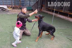 Từ vụ đàn chó cắn chết bé trai: 'Con chó không có tội, lỗi là ở chủ'