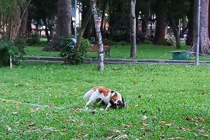 Ám ảnh chó thả rông từ chung cư đến đường phố