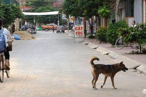 Kinh hãi chó thả rông 'đại náo' làng quê
