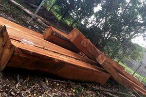 Thanh niên 9X bị phạt 50 triệu đồng vì vận chuyển gỗ lậu