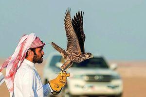 Mua chim ưng, lạc đà tại khu chợ có niên đại hơn 100 năm ở Qatar