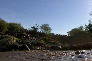 Cá sấu đoạt mạng linh dương đầu bò đang sang sông