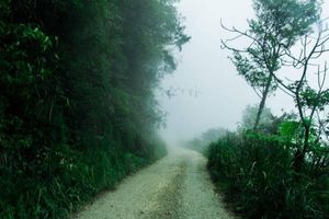 Nhóm nam nữ bị hành hung khi khám phá rừng Tam Đảo