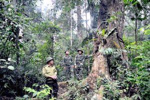 Tuyên Quang: Tăng cường đẩy mạnh công tác quản lý bảo vệ và phát triển rừng